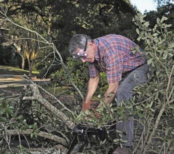 Porządkowanie działki - jak radzić sobie z odpadami zielonymi