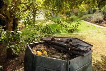 Kompostowanie odpadów zielonych - co wrzucać do kompostownika?